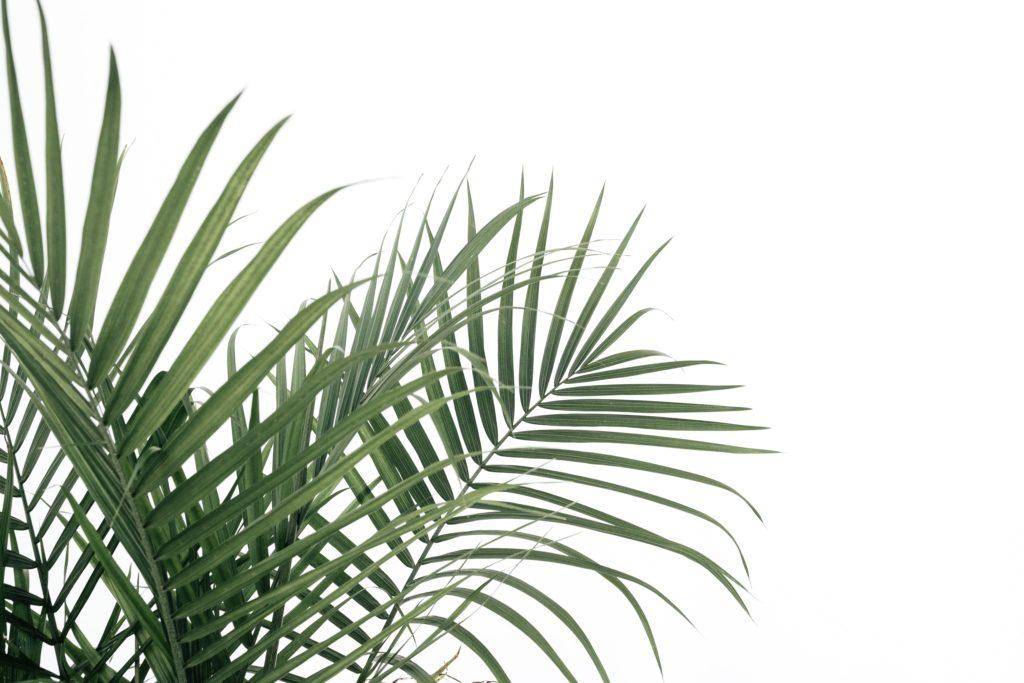 Dem Leben dienen. Predigt am Palmsonntag.